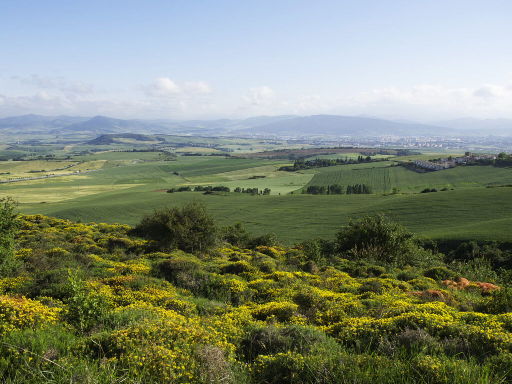 Landscape looking east toward Pamplona from the path up the Hill of Forgiveness with yellow flowers and brambles and green grass fields on rolling country